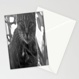 Winter Stare Stationery Cards
