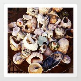 Shell Collection Art Print