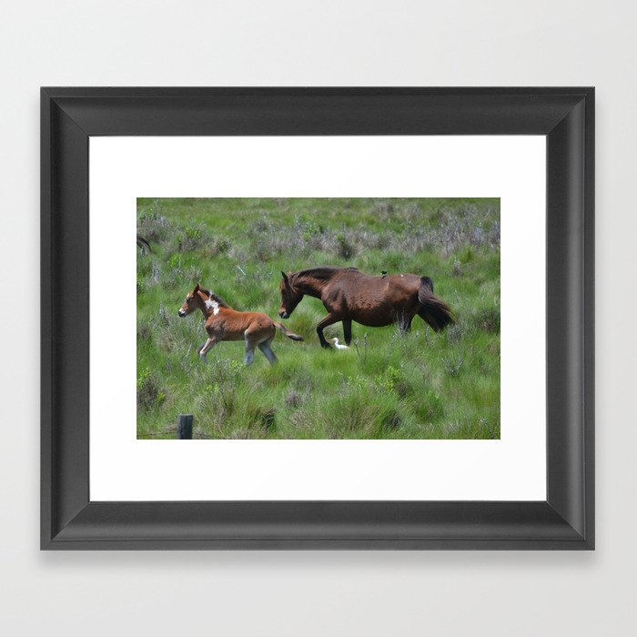 Chincoteague Ponies Framed Art Print