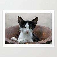 Kitty-in-a-Pot Art Print
