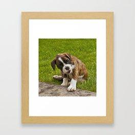 Boxer Pupy Framed Art Print