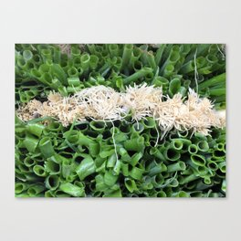 Green Onions are beautiful! Canvas Print