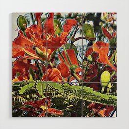 Royal Poinciana Tree Full Bloom Wood Wall Art