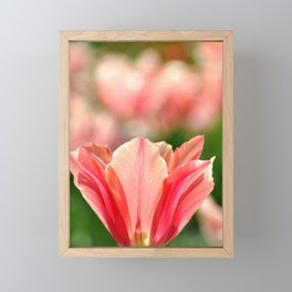SPRING PINK AND RED TULIP Framed Mini Art Print