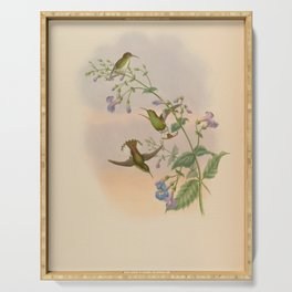 Vintage Print - A Monograph of the Hummingbirds (1849) - Coppery-headed Emerald Serving Tray