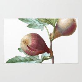 HIGHEST QUALITY botanical poster of Fig Rug