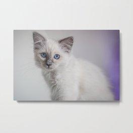 Pretty Kitty Metal Print