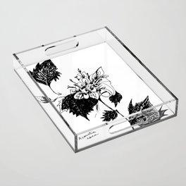 Acourtia nana Acrylic Tray