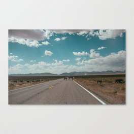 cows on the open road Canvas Print