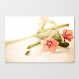 Beautiful origanum flower - Floral Photography #Society6 Canvas Print