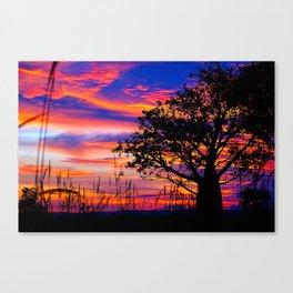 Pinks n Purples thru Boab Tree Canvas Print