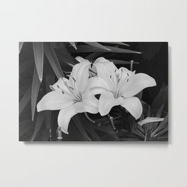 Contemporary Black White Lily Flower Floral Art A116 Metal Print