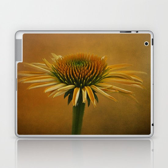 Dressed in Color Laptop & iPad Skin