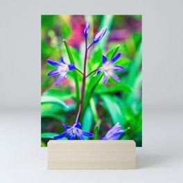 Siberian Squill Flower Mini Art Print