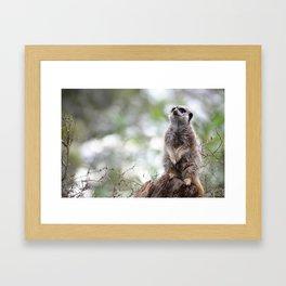 Meerkat on guard duty Framed Art Print