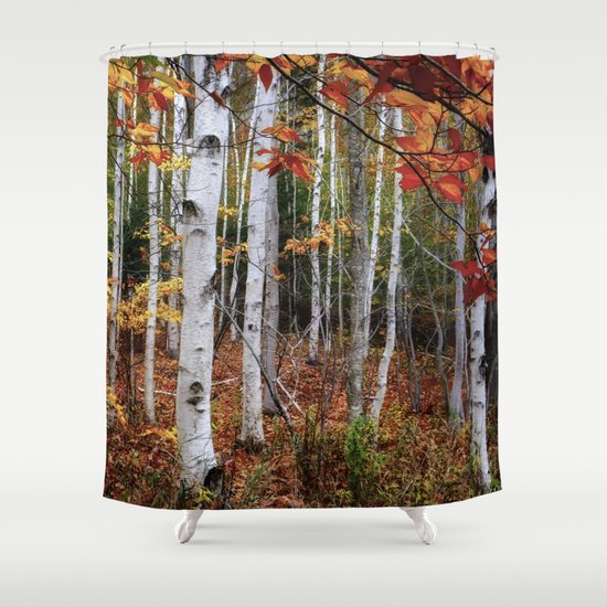 Acadia Fall Color Shower Curtain By Wood N Images
