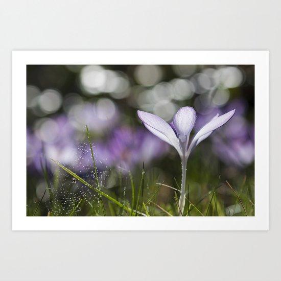 Blue Spring Flower  Crocus - Floral Art Print