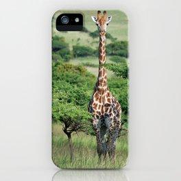 Giraffe Standing tall iPhone Case