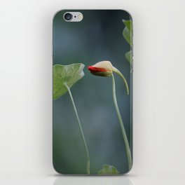 Kapuzinerkresse / Indian cress iPhone Skin