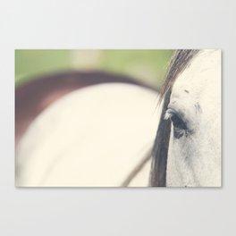 Grey Horse Canvas Print