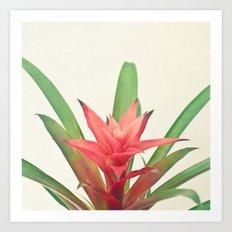 Bromelia Art Print