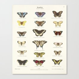 Vintage Butterfly Chart Canvas Print