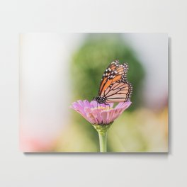 Monarch and a Zinnia Metal Print