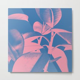 Rubber Plant pink and blue Metal Print