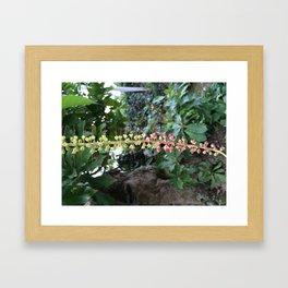 Barringtonia acutangula Framed Art Print