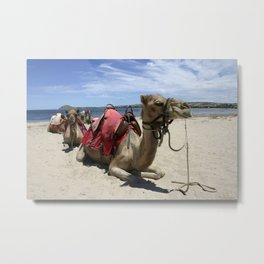 Camels on the Beach Metal Print