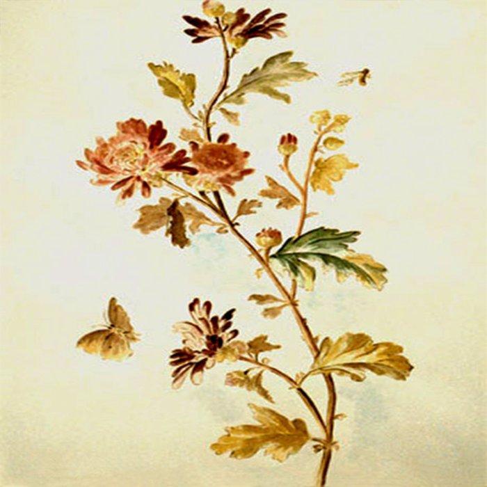 Chrysantheme Duvet Cover