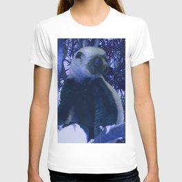 Sifaka in Blue T-shirt