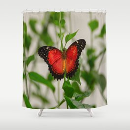 Red Lacewing Butterfly Shower Curtain