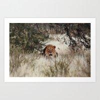 King of the Kalahari Art Print