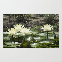 Longwood Gardens - Spring Series 275 Rug