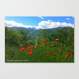 Wild poppies of the Pyrenees mountains Canvas Print