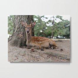 Nara Beauty Metal Print