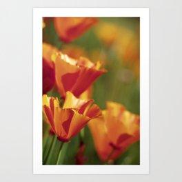 Springtime Poppies Art Print