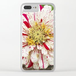 Candy Cane Zinnia Clear iPhone Case