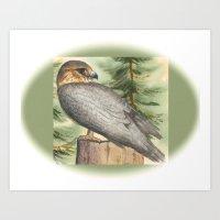 Merlin Falcon (Keir) Art Print
