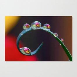 garden drops Canvas Print