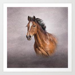 Drawing portrait  horse Art Print