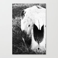 The Skull of a Cow Canvas Print