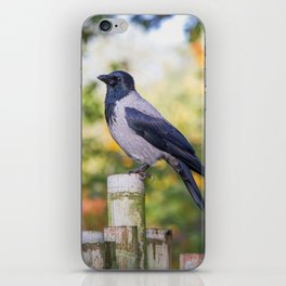 Hooded Crow iPhone Skin
