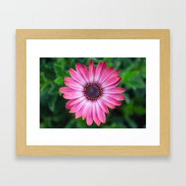 Flower Portrait - Pink Sunshine Framed Art Print