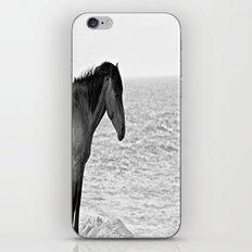 Assateague Pony iPhone & iPod Skin