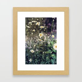 Daisy IV Framed Art Print