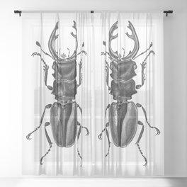 Beetle 17 Sheer Curtain