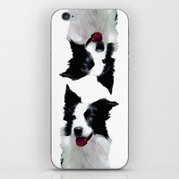 border collie iPhone & iPod Skins featuring Border Collie by Albert Tjandra