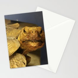 It's Tortoise, not Turtle Stationery Cards